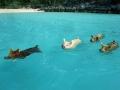 exuma-pigs-beach